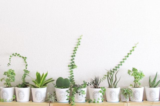 何種類もの観葉植物。人間の個性みたいなイメージの画像