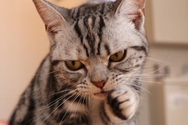 ネコがガン飛ばしている。