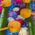 雨の日に紫陽花の屋外鑑賞